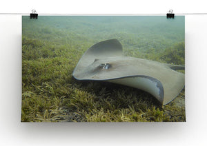 Darkspotted stingray Canvas Print or Poster - Canvas Art Rocks - 2