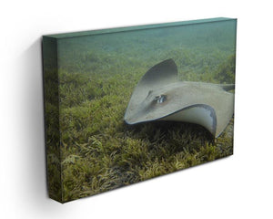 Darkspotted stingray Canvas Print or Poster - Canvas Art Rocks - 3