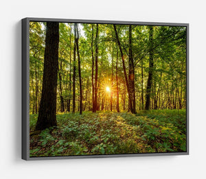 Dawn in the forest of Bavaria HD Metal Print