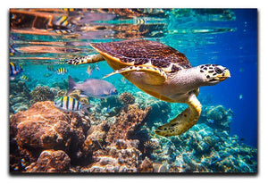Eretmochelys imbricata Canvas Print or Poster  - Canvas Art Rocks - 1