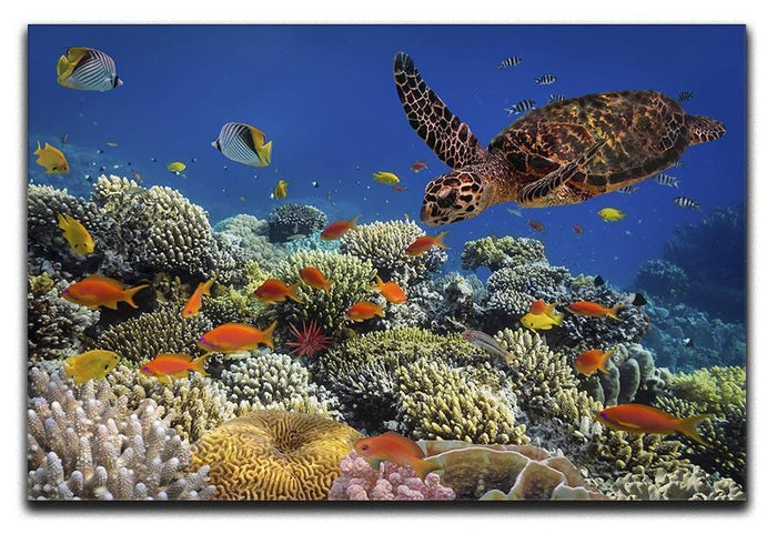 Eretmochelys imbricata floats under water Canvas Print or Poster