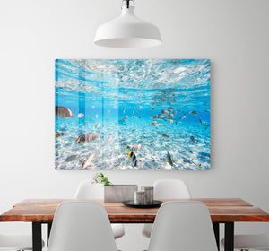 Fish and black tipped sharks HD Metal Print
