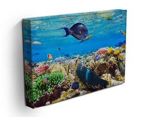 Fish in the Red Sea Canvas Print or Poster - Canvas Art Rocks - 3