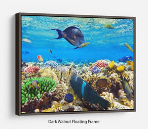 Fish in the Red Sea Floating Frame Canvas