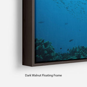 Flock of fish flowing Floating Frame Canvas