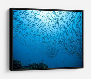 Flock of fish flowing HD Metal Print