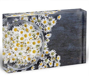 Fresh medicinal roman chamomile flower Acrylic Block - Canvas Art Rocks - 1
