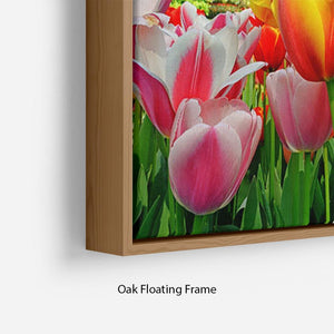 Fresh multicolored tulips in a spring park Floating Frame Canvas