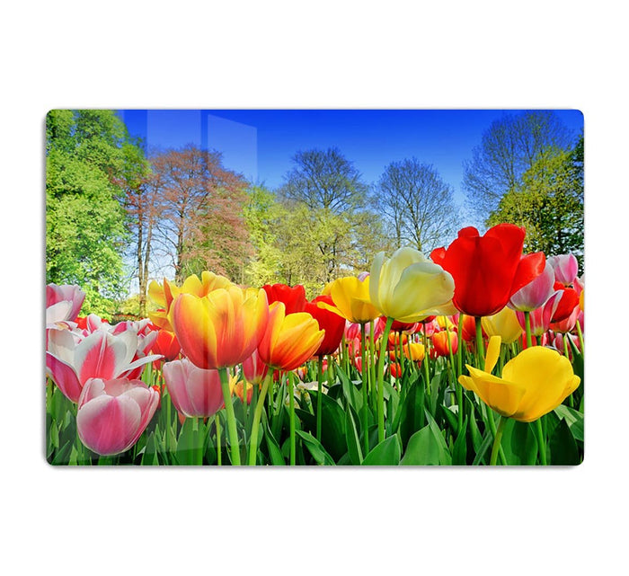 Fresh multicolored tulips in a spring park HD Metal Print