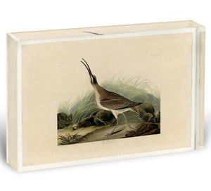 Great Esquimaux Curlew by Audubon Acrylic Block - Canvas Art Rocks - 1