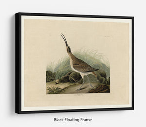 Great Esquimaux Curlew by Audubon Floating Frame Canvas - Canvas Art Rocks - 1
