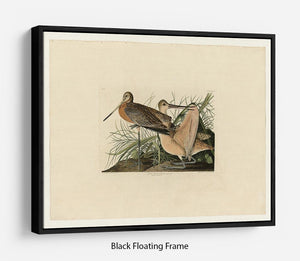 Great Marbled Godwit by Audubon Floating Frame Canvas - Canvas Art Rocks - 1