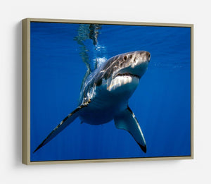 Great White HD Metal Print