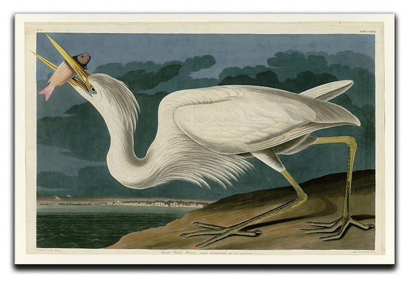 Great White Heron by Audubon Canvas Print or Poster - Canvas Art Rocks - 1