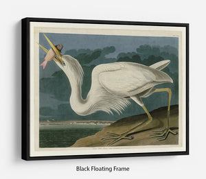 Great White Heron by Audubon Floating Frame Canvas - Canvas Art Rocks - 1