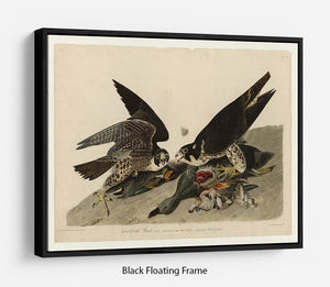 Great footed Hawk by Audubon Floating Frame Canvas - Canvas Art Rocks - 1