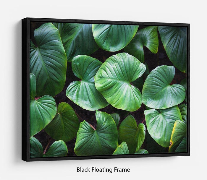 Green plant Floating Frame Canvas