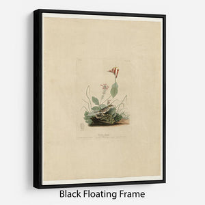 Henslows Bunting by Audubon Floating Frame Canvas - Canvas Art Rocks - 1