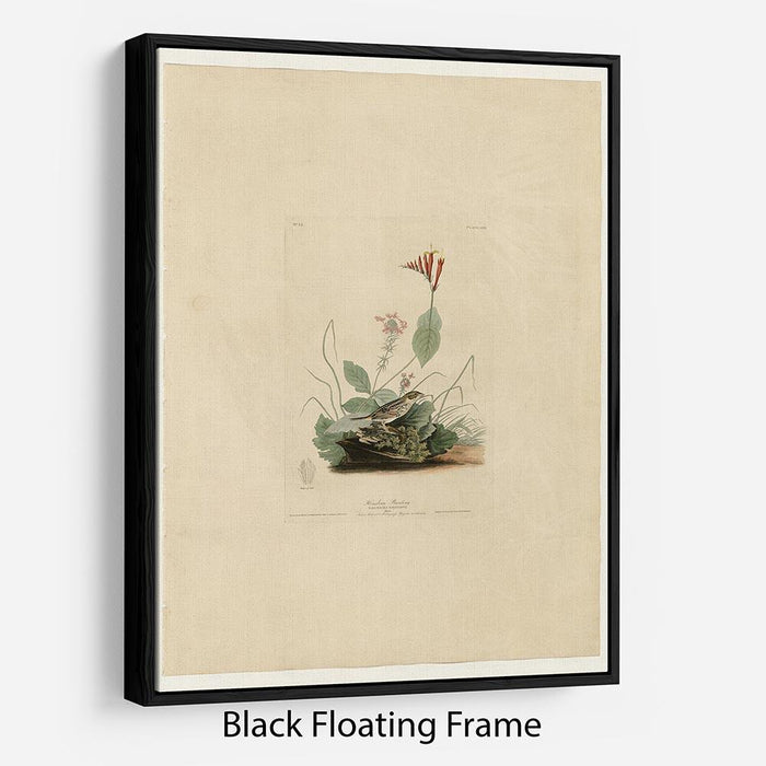 Henslows Bunting by Audubon Floating Frame Canvas