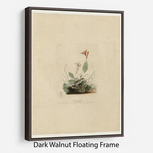Henslows Bunting by Audubon Floating Frame Canvas - Canvas Art Rocks - 5
