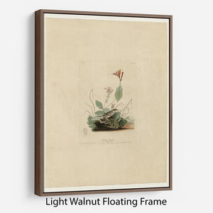 Henslows Bunting by Audubon Floating Frame Canvas - Canvas Art Rocks 7