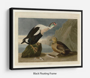 King Duck by Audubon Floating Frame Canvas - Canvas Art Rocks - 1