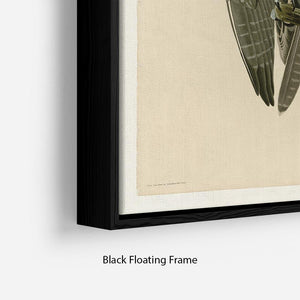 Labrador Falcon by Audubon Floating Frame Canvas - Canvas Art Rocks - 2