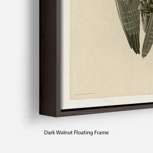 Labrador Falcon by Audubon Floating Frame Canvas - Canvas Art Rocks - 6