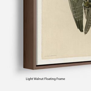Labrador Falcon by Audubon Floating Frame Canvas - Canvas Art Rocks - 8