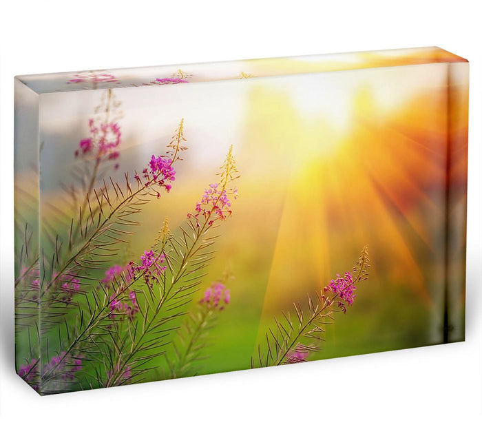 Landscape with Fireweed at sunny summer Acrylic Block