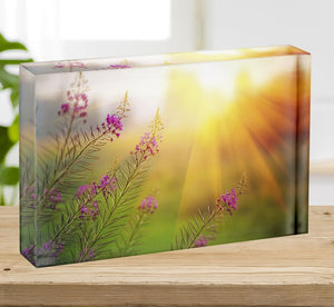 Landscape with Fireweed at sunny summer Acrylic Block - Canvas Art Rocks - 2