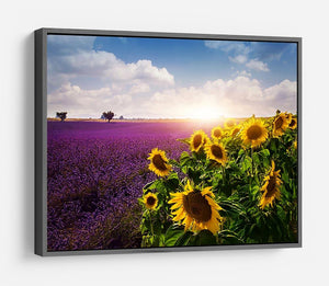 Lavender and sunflowers fields HD Metal Print