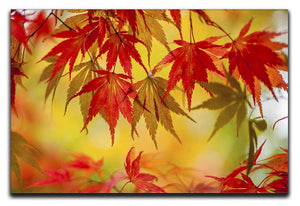 Leaf Patterns Canvas Print or Poster - Canvas Art Rocks - 1