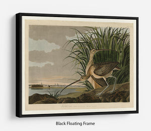 Long billed Curlew by Audubon Floating Frame Canvas - Canvas Art Rocks - 1