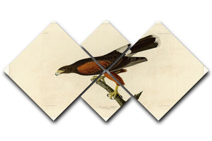 Louisiana Hawk by Audubon 4 Square Multi Panel Canvas - Canvas Art Rocks - 1