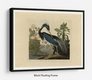Louisiana Heron by Audubon Floating Frame Canvas - Canvas Art Rocks - 1