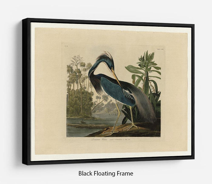 Louisiana Heron by Audubon Floating Frame Canvas