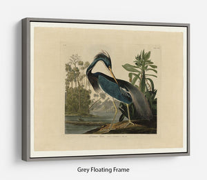 Louisiana Heron by Audubon Floating Frame Canvas - Canvas Art Rocks - 3