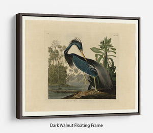 Louisiana Heron by Audubon Floating Frame Canvas - Canvas Art Rocks - 5