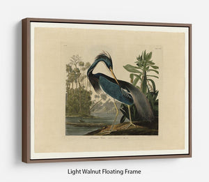 Louisiana Heron by Audubon Floating Frame Canvas - Canvas Art Rocks 7