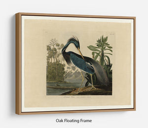 Louisiana Heron by Audubon Floating Frame Canvas - Canvas Art Rocks - 9