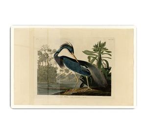 Louisiana Heron by Audubon HD Metal Print - Canvas Art Rocks - 1