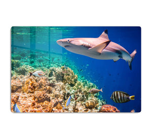 Maldives Indian Ocean coral reef HD Metal Print