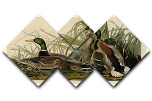 Mallard Duck by Audubon 4 Square Multi Panel Canvas - Canvas Art Rocks - 1
