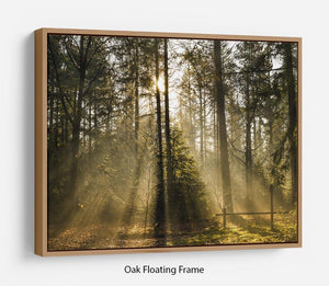 Morning sun in the forrest Floating Frame Canvas