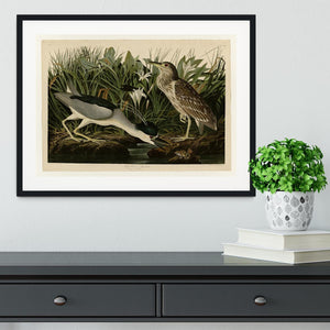 Night Heron by Audubon Framed Print - Canvas Art Rocks - 1