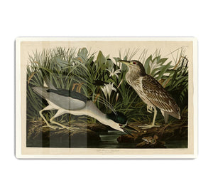 Night Heron by Audubon HD Metal Print - Canvas Art Rocks - 1