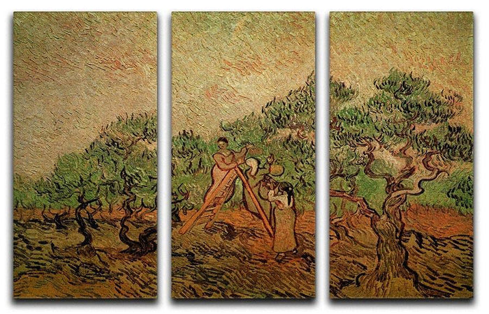 Olive Picking by Van Gogh 3 Split Panel Canvas Print