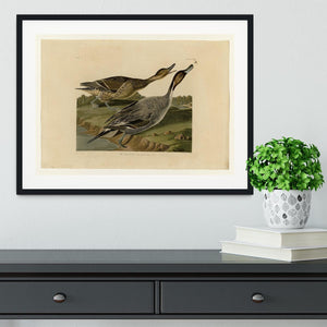 Pin tailed Duck by Audubon Framed Print - Canvas Art Rocks - 1