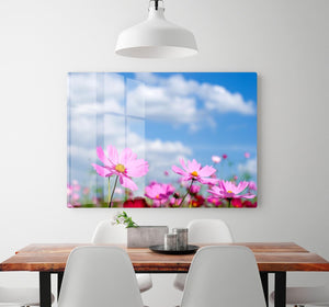 Pink cosmos field and sky HD Metal Print